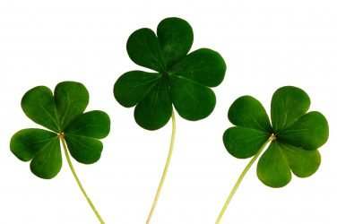 pretty green clovers